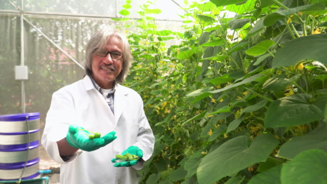 Senior scientist shows collected cucumber from his research
