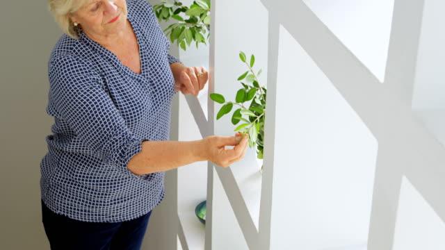 senior woman checking plant 4k - 60 69 anni video stock e b–roll