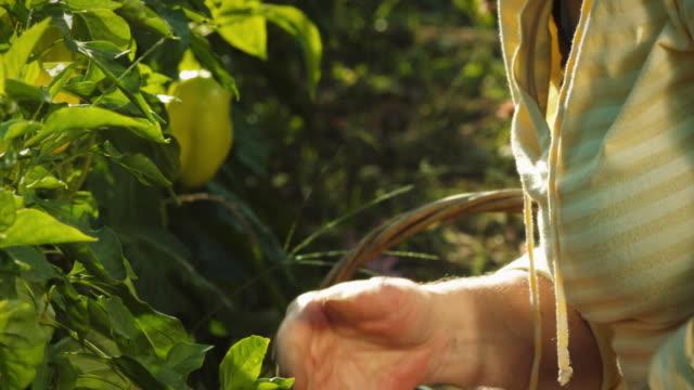 Senior woman gardens with arthritis. video
