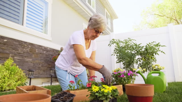 senior woman in a backyard garden - gardening video stock e b–roll