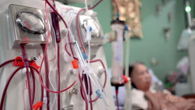 vídeos de stock, filmes e b-roll de paciente idosa durante hemodiálise em hospital - rim órgão interno