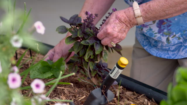 A senior woman picks herbs and flowers