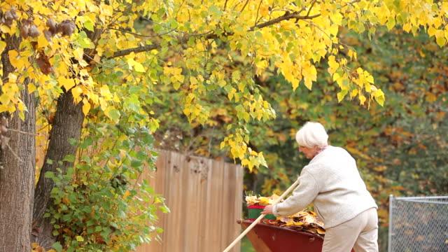 Senior woman raking fall leaves video