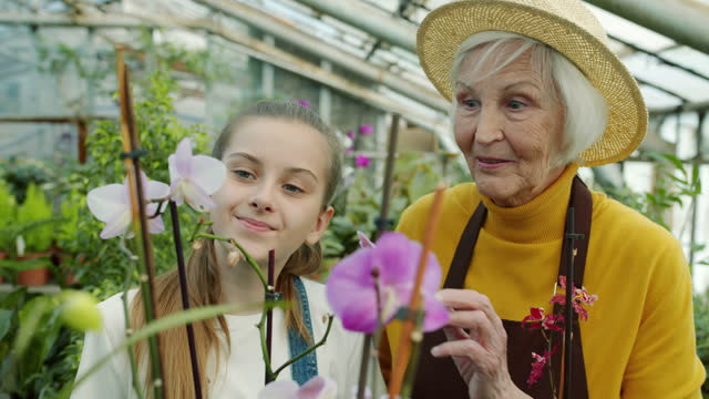 Senior woman showing beautiful orchids to granddaughter talking to child in greenhouse