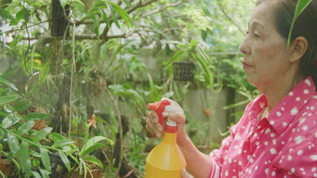 4K CU Senior woman spraying orchid flower with spray bottle