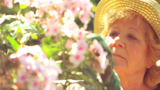Senior woman trimming flowers in garden Senior woman trimming flowers in garden on a sunny day horticulture stock videos & royalty-free footage