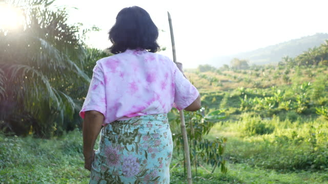 Senior woman walking with a cane into the garden Senior Asian woman walking with a cane into the garden stick plant part stock videos & royalty-free footage