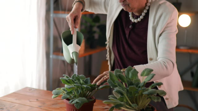 Senior Woman Watering Flowers Senior Woman Watering Flowers watering stock videos & royalty-free footage