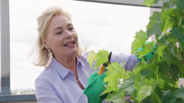 senior woman working in the garden - gardening video stock e b–roll