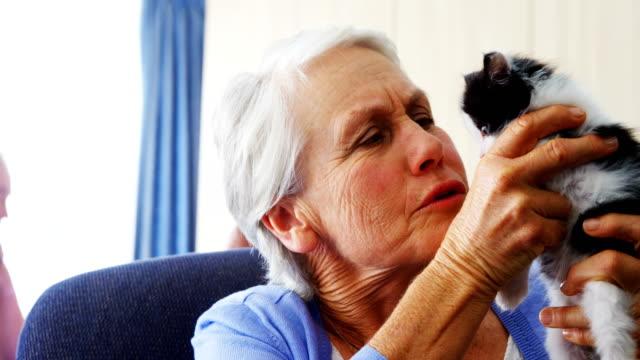 Senior women holding kitten while sitting on armchair at retirement home 4k video