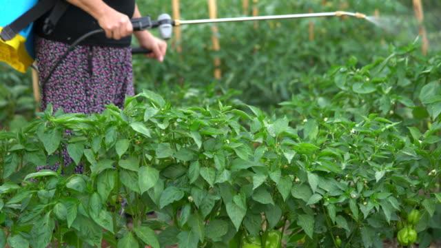 senior women  pesticide spraying in garden - insetticida video stock e b–roll