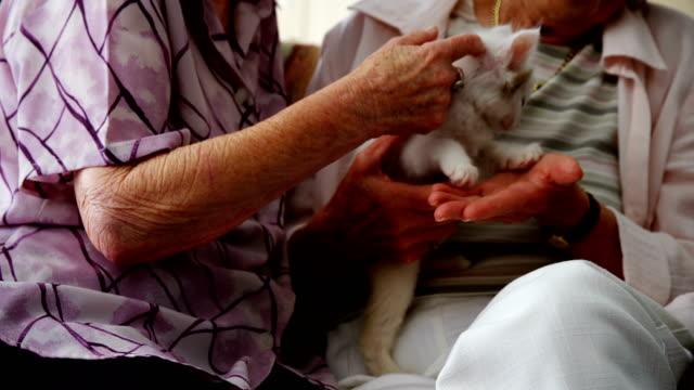 Senior women stroking kitten on armchair at retirement home 4k video