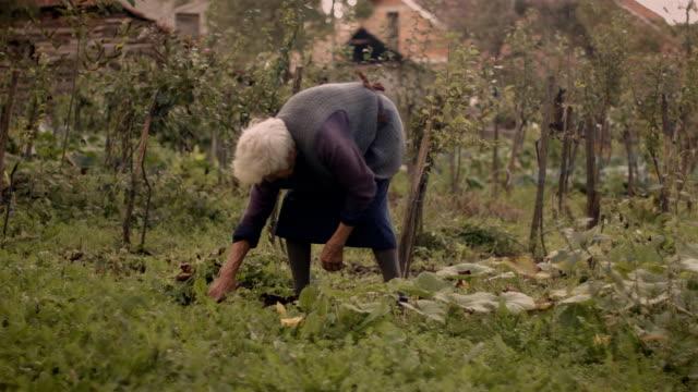 Senior Women Working in The Vegetables Garden video