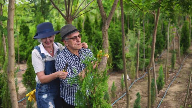 Senior workers at plant nursery garden examine plants