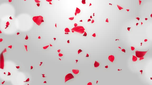 Separated Pink Cherry Blossom Rose Petals Falling Loop Green Screen for overlays.
