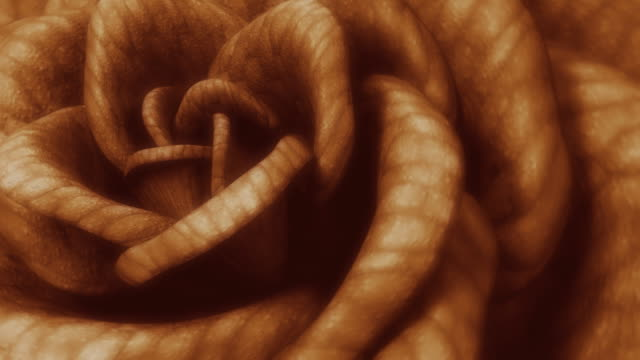 Sepia rose video