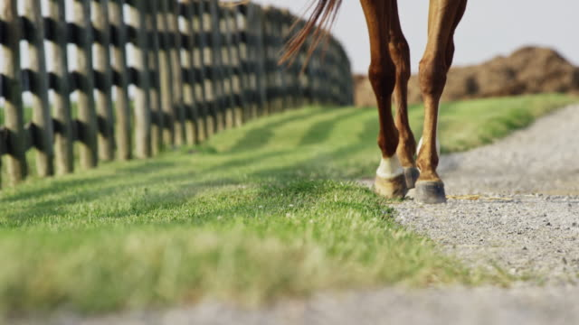 Sequence of Wide and Tight Slow Motion Shots of a Brown and White Horse's Legs and Feet Walking down a Gravel Road Next to a Wooden Fence on a Sunny Day