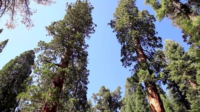 parchi nazionali di sequoia e kings canyon - riserva naturale parco nazionale video stock e b–roll