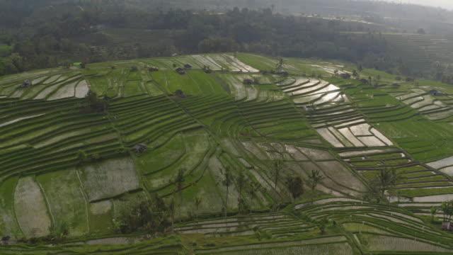 巴厘島,印尼水稻梯田和周圍植物的寧靜無人機拍攝。 - 東南 個影片檔及 b 捲影像