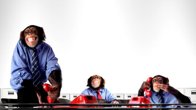 Service Team Monkey