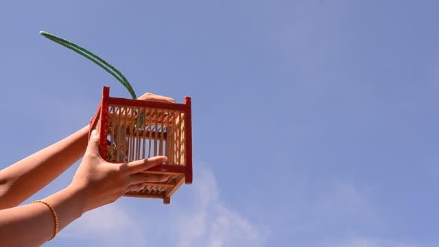 set a bird free - bur bildbanksvideor och videomaterial från bakom kulisserna