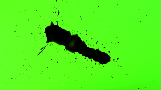 Set of abstract artistic ink splatters, droplets falling and spreading on chroma key. Ink bleed and bloom, drips on green screen. Spilling black paint on white and green background, watercolor swirls. Ink rain, splashes, transition on wet paper, top view.
