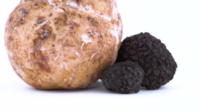 set of black and white truffle mushrooms rotating on the on the turntable isolated on the white background. closeup. - alta moda italy video stock e b–roll
