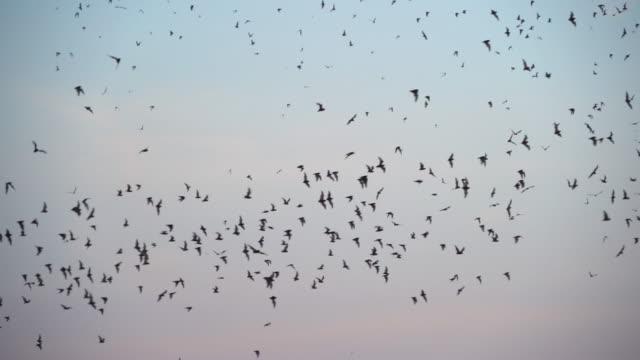 다른 검은 박쥐 실루엣의 세트는 푸른 하늘 배경에 고립 된 비행. 할로웬 파티 카드 배경 템플릿입니다. - 하늘을 나는 새 스톡 비디오 및 b-롤 화면