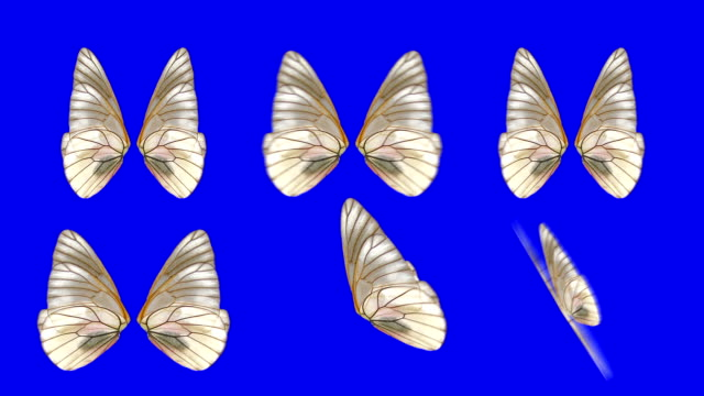 A set of Moth Wings Waving in Different Speed and Angles on a Blue Screen Background video