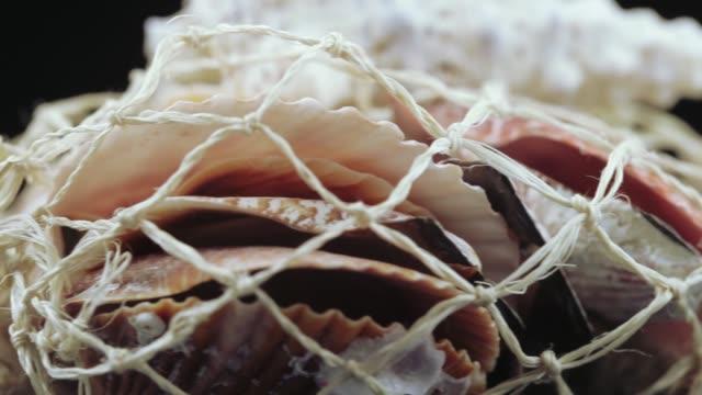 vídeos de stock e filmes b-roll de set of seashells bulk - bugio