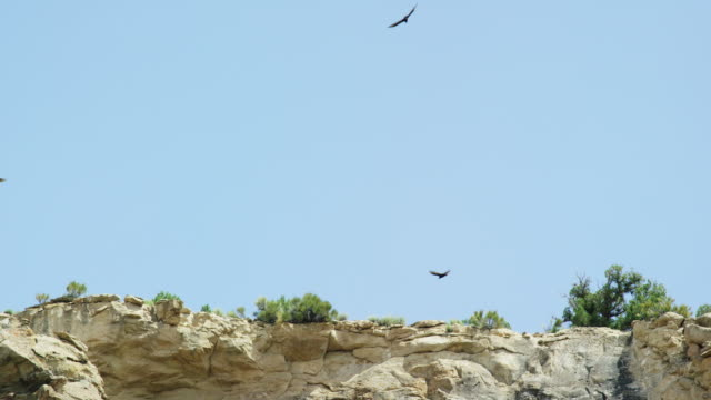 Several Hawks Circle the Side of a Rocky Cliff in a High Desert under a Clear, Blue, Sunny Sky