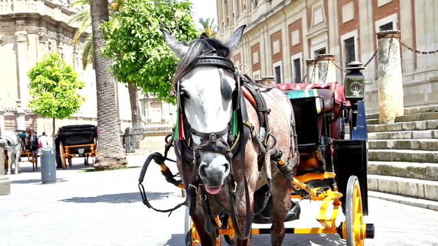 Seville Horse carriage video