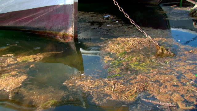 sewage into the sea video
