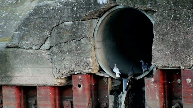 Sewer outlet video