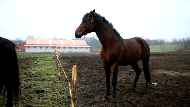 sexual behavior of horses - equino video stock e b–roll