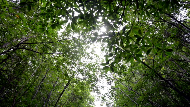 Shade under trees video