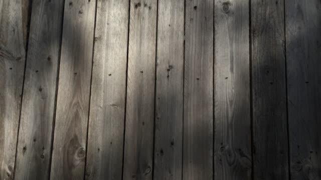 秋の庭、木の壁の4kシャドウ。 - 影点の映像素材/bロール