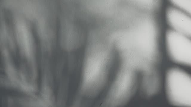 牆上的葉子的影子。 - 影 個影片檔及 b 捲影像
