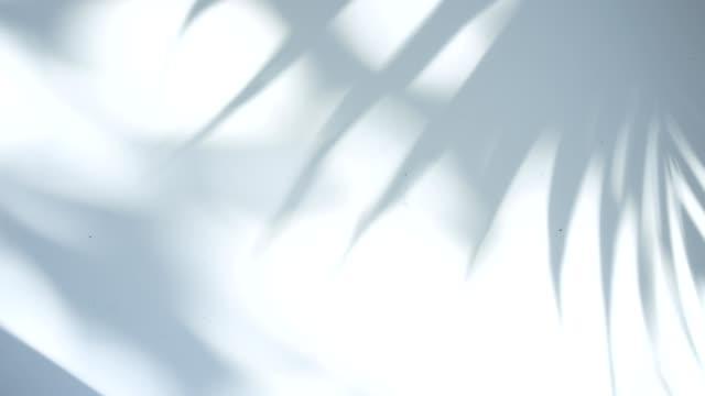 棕櫚的陰影在風中搖擺。在白色背景 - 影 個影片檔及 b 捲影像