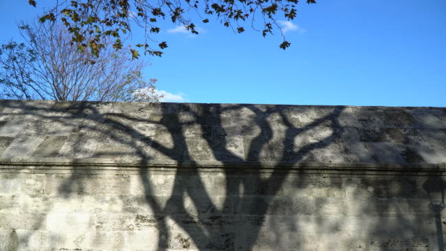 Shadow Of The Plane Tree On Stone Wall video
