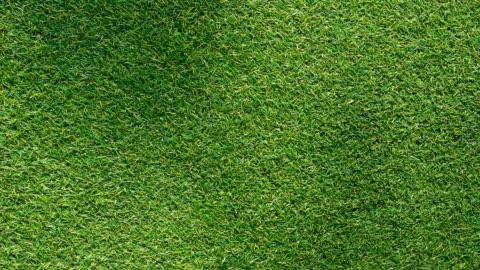 schatten auf dem grashintergrund - gras stock-videos und b-roll-filmmaterial
