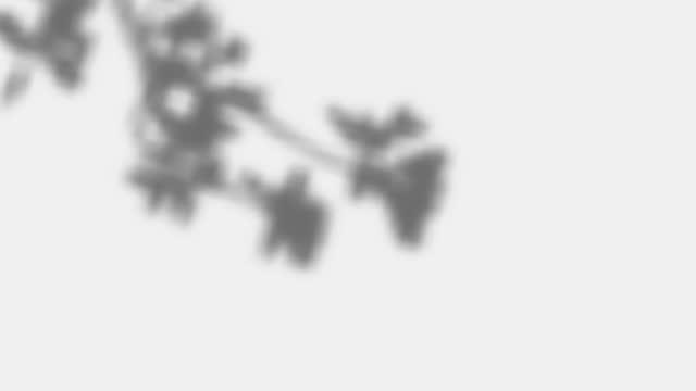 effetto sovrapposizione shadow. ombra di sovrapposizione trasparente da foglie, rami, piante e fogliame ondeggiano dal vento. effetto luminoso morbido realistico di ombre e fulmini naturali. video 4k con canale alfa. - ramo parte della pianta video stock e b–roll