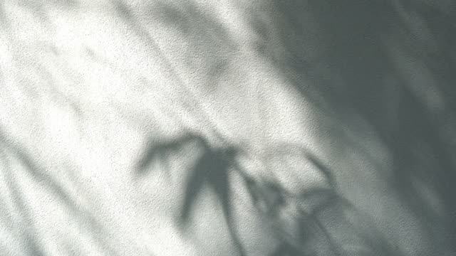 shadows leaf with blowing wind on a white wall closeup the motion of shadows leaf with blowing wind on a white wall background botany stock videos & royalty-free footage