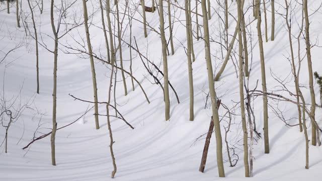vídeos de stock, filmes e b-roll de sombras de aspen árvores curvando-se sobre a neve - aspen colorado