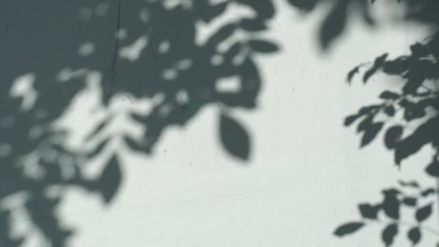 vídeos de stock, filmes e b-roll de sombras de árvores folha na parede para conceito de fundo - folha
