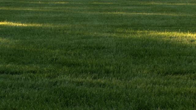 Shadows on Grass video