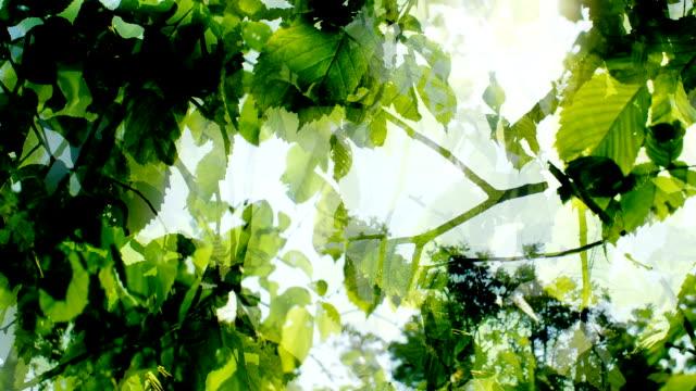 ブナの木のスプリング:シャドウ遅いフロー(ループ ビデオ