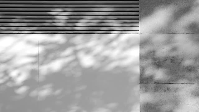 Shadows Tree video