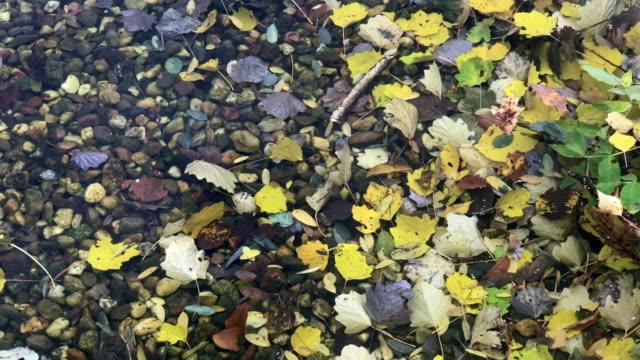 vídeos de stock, filmes e b-roll de água rasa strewn com folaige outonal - setembro amarelo