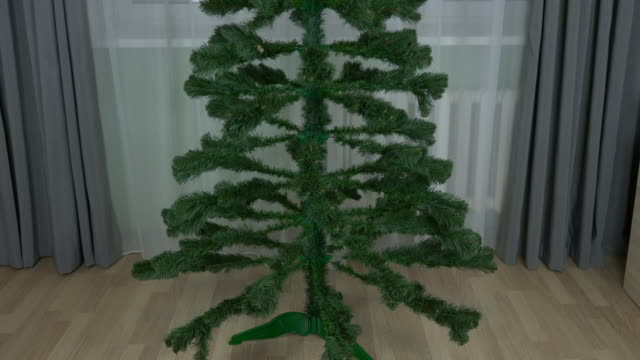 Shaping pine evergreen fir tree for Christmas. Adult caucasian man at home preparing fir pine tree for decorating for Christmas time. Fir tree spruce grows at home living room. Eve. video